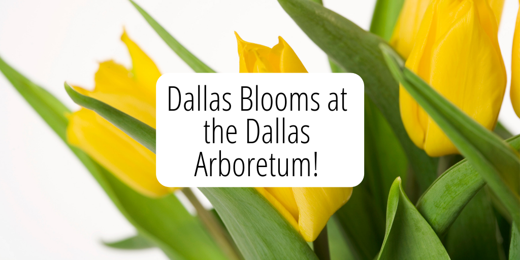 The Dallas Arboretum is hosting the annual Dallas Blooms flower festival from February 23-April 7th. This awesome event is a great reason to get out and enjoy some pre-spring festivities here in Dallas.