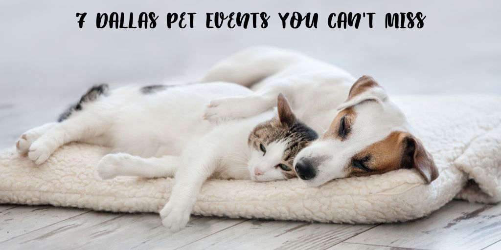 When it comes to Dallas living you can't go wrong with these 7 Dallas pet events. These 7 Dallas pet events you can't miss are pet friendly fun for the whole family. You can take your furry pal out to get some fresh air, explore Dallas at your side, and of course meet some other pet lovers along the way.